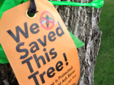 Emerald Ash Borer Prevention Tag
