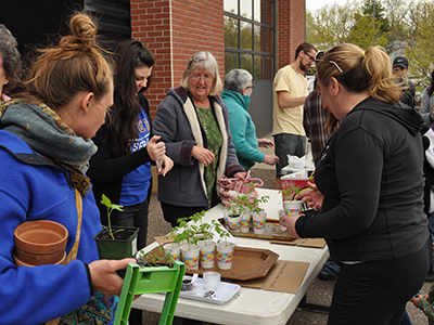 gardeners swap 2019 people looking at different plants