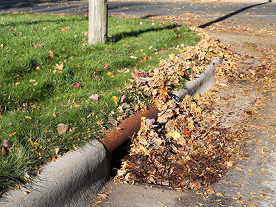 storm drain with leaves